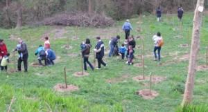 Plantación árboles16